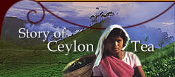Story of Ceylon Tea
